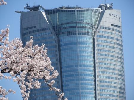 六本木ヒルズと桜.jpg