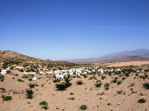 澄み切った空、アラシャンの放牧風景.JPG