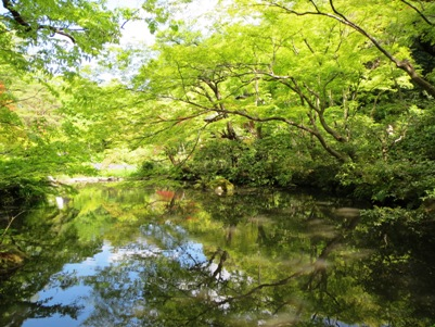 根津美術館の池.jpg